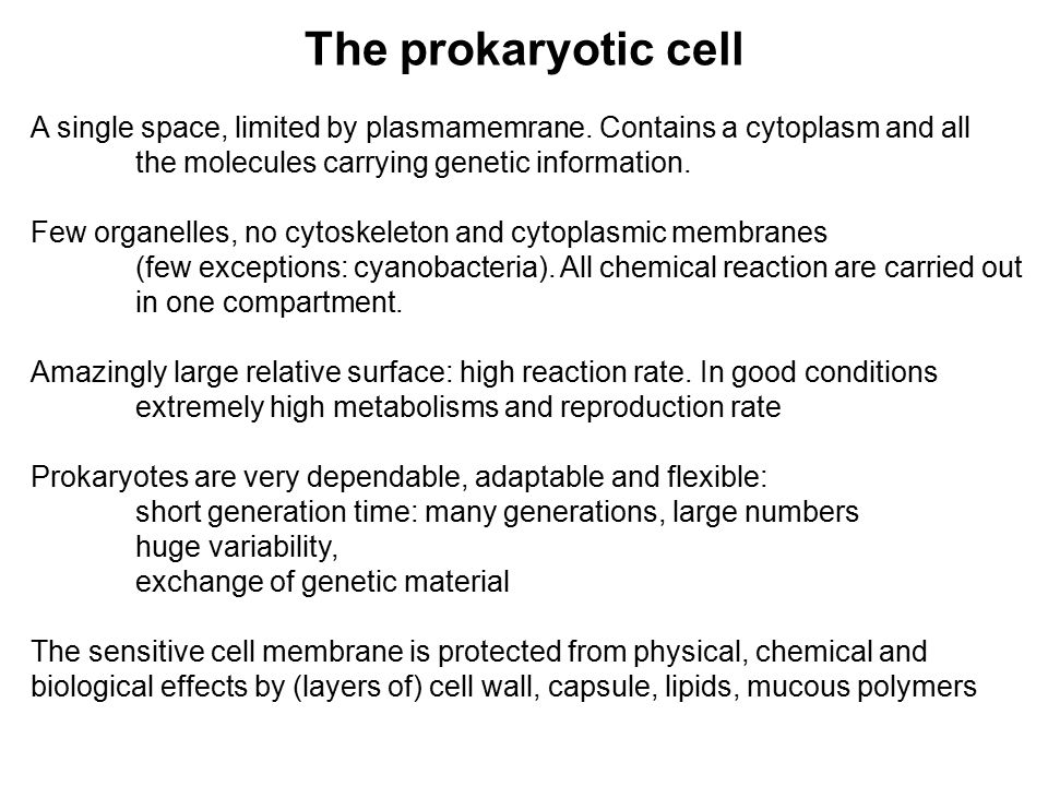The prokaryotic cell A single space, limited by plasmamemrane.