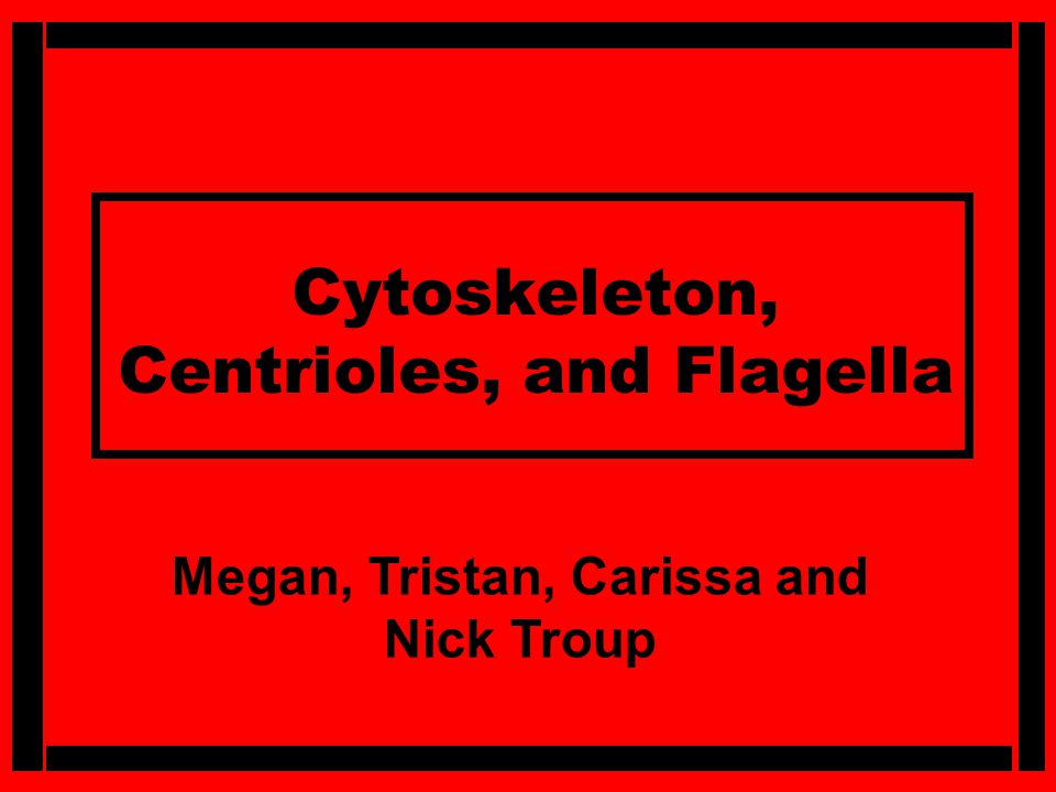 Cytoskeleton, Centrioles, and Flagella Megan, Tristan, Carissa and Nick Troup