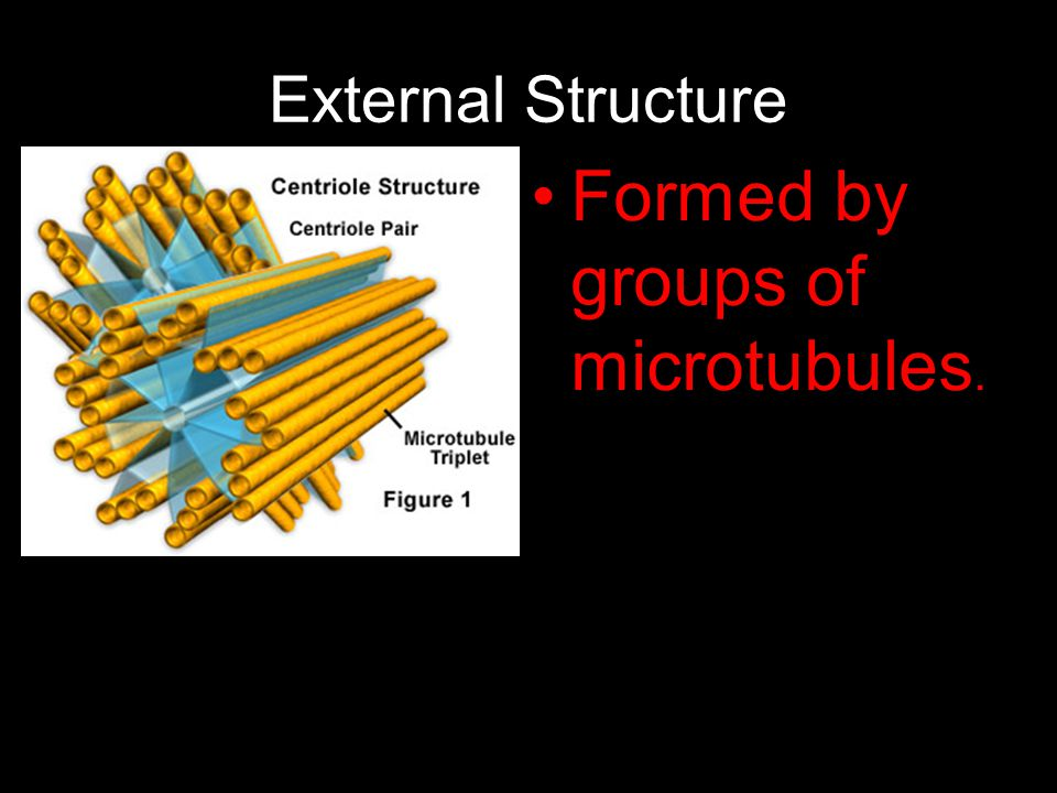 External Structure Formed by groups of microtubules.