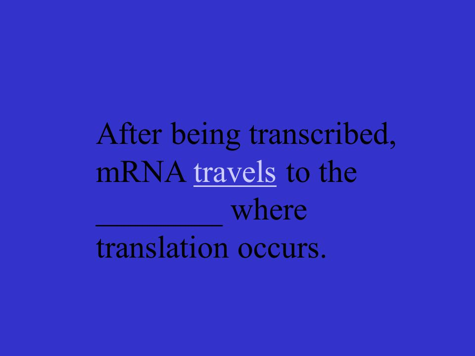 After being transcribed, mRNA travels to the ________ where translation occurs.travels