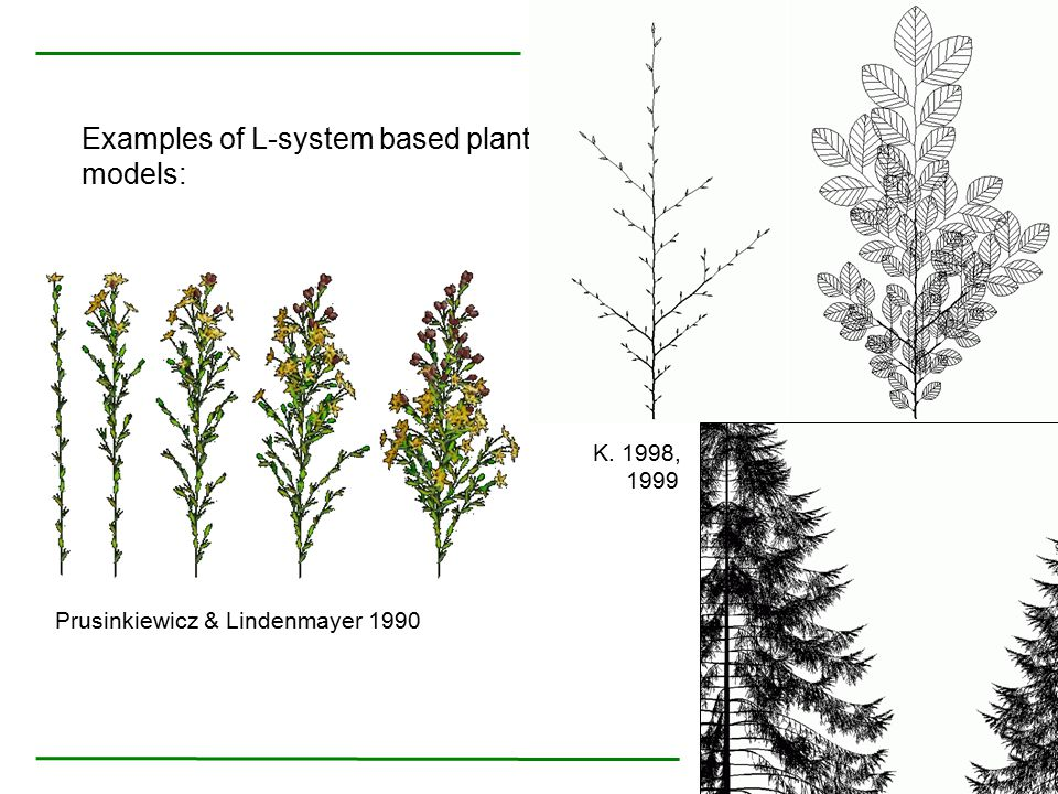 Examples of L-system based plant models: Prusinkiewicz & Lindenmayer 1990 K. 1998, 1999