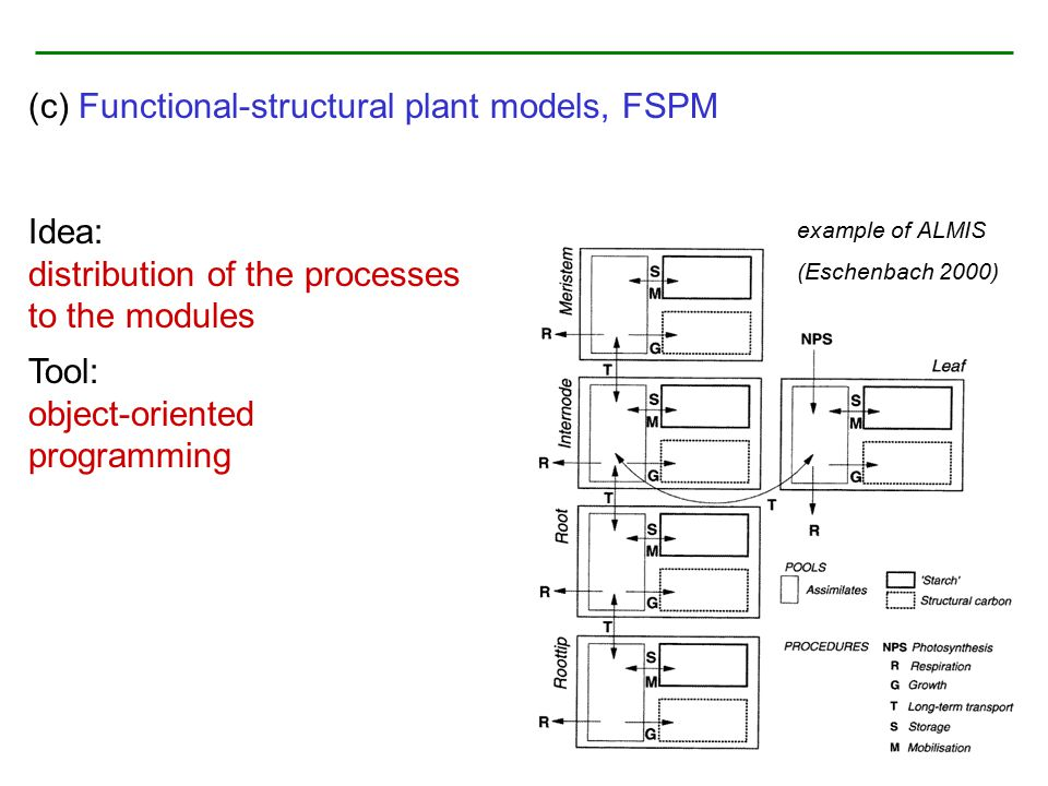 (c) Functional-structural plant models, FSPM Idea: distribution of the processes to the modules Tool: object-oriented programming example of ALMIS (Es