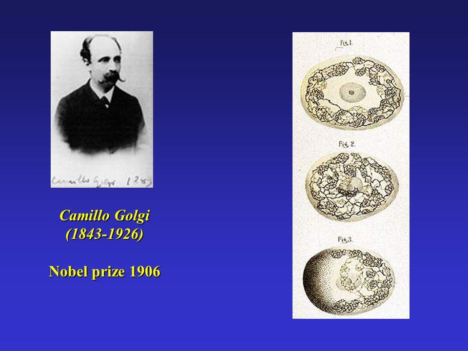 Camillo Golgi (1843-1926) Nobel prize 1906