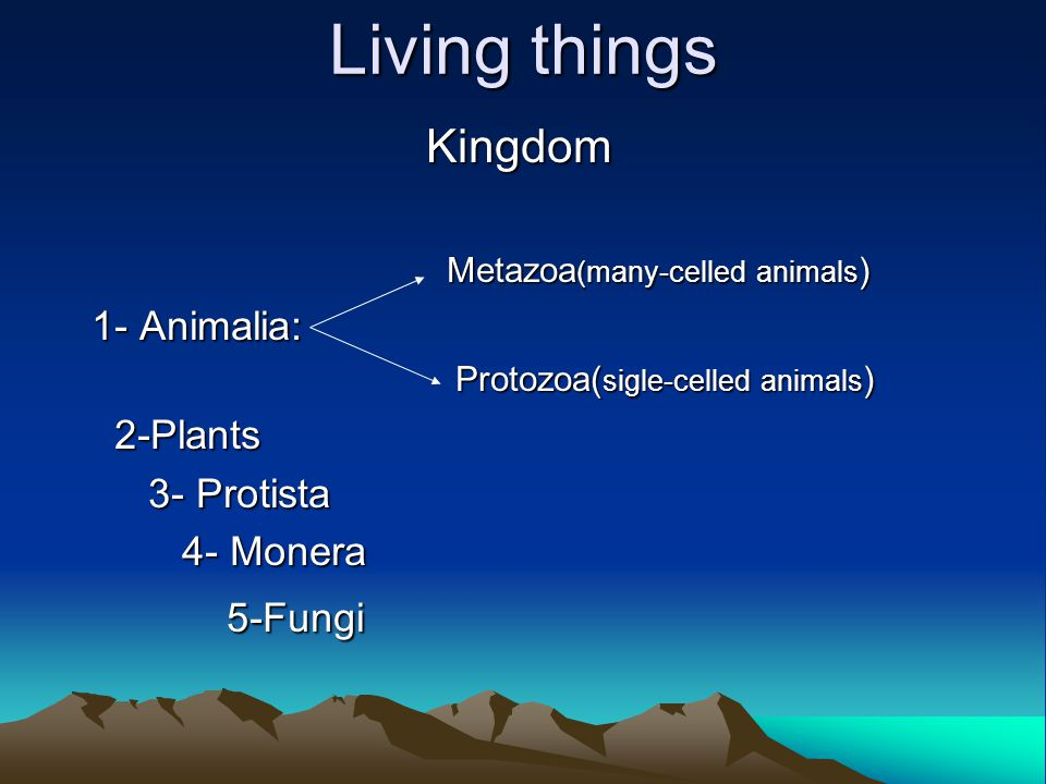 Living things Kingdom Metazoa (many-celled animals ) Metazoa (many-celled animals ) 1- Animalia: 1- Animalia: Protozoa( sigle-celled animals ) Protozoa( sigle-celled animals ) 2-Plants 2-Plants 3- Protista 3- Protista 4- Monera 4- Monera 5-Fungi 5-Fungi