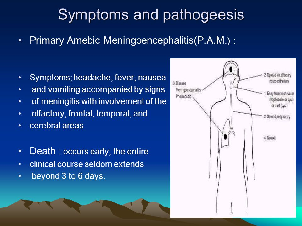 Symptoms and pathogeesis Primary Amebic Meningoencephalitis(P.A.M.) : Symptoms ; headache, fever, nausea and vomiting accompanied by signs of meningitis with involvement of the olfactory, frontal, temporal, and cerebral areas Death : occurs early; the entire clinical course seldom extends beyond 3 to 6 days.