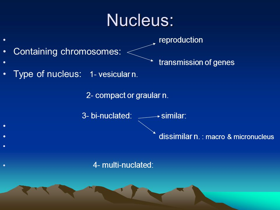 Nucleus: reproduction Containing chromosomes: transmission of genes Type of nucleus: 1- vesicular n.