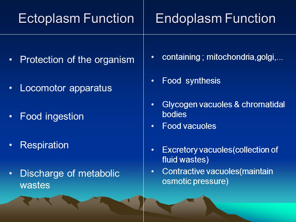Ectoplasm Function Endoplasm Function Protection of the organism Locomotor apparatus Food ingestion Respiration Discharge of metabolic wastes containing ; mitochondria,golgi,...
