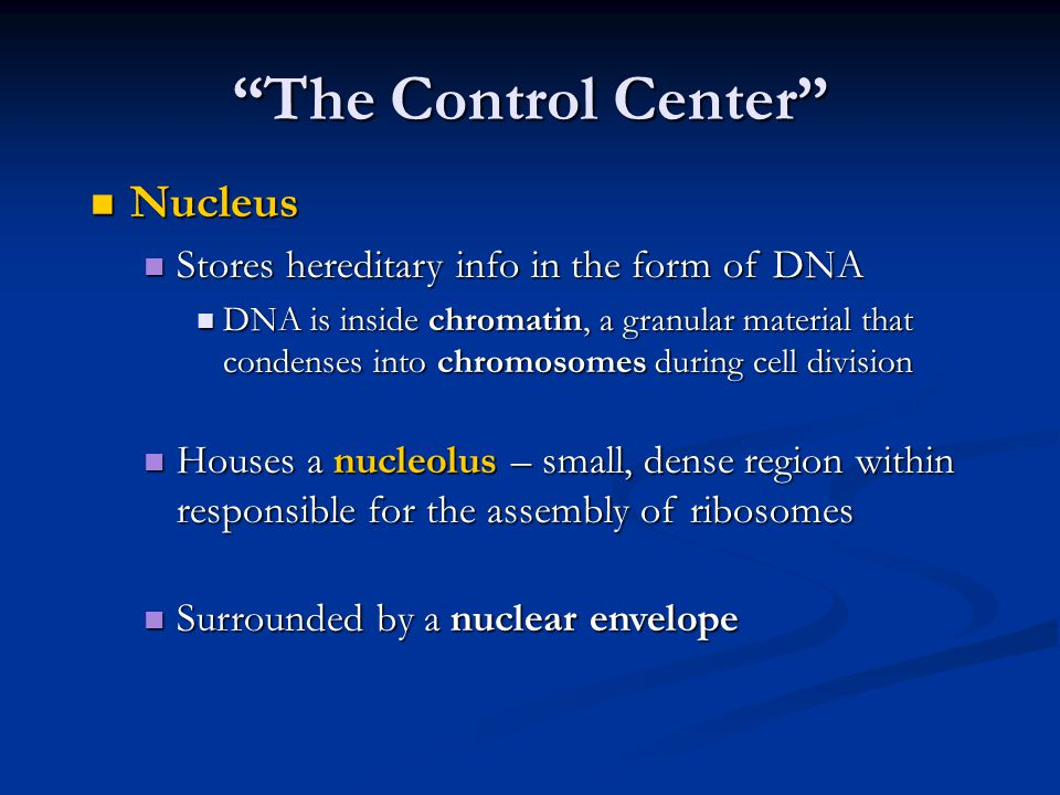 Nucleus Nucleus Stores hereditary info in the form of DNA Stores hereditary info in the form of DNA DNA is inside chromatin, a granular material that condenses into chromosomes during cell division DNA is inside chromatin, a granular material that condenses into chromosomes during cell division Houses a nucleolus – small, dense region within responsible for the assembly of ribosomes Houses a nucleolus – small, dense region within responsible for the assembly of ribosomes Surrounded by a nuclear envelope Surrounded by a nuclear envelope The Control Center