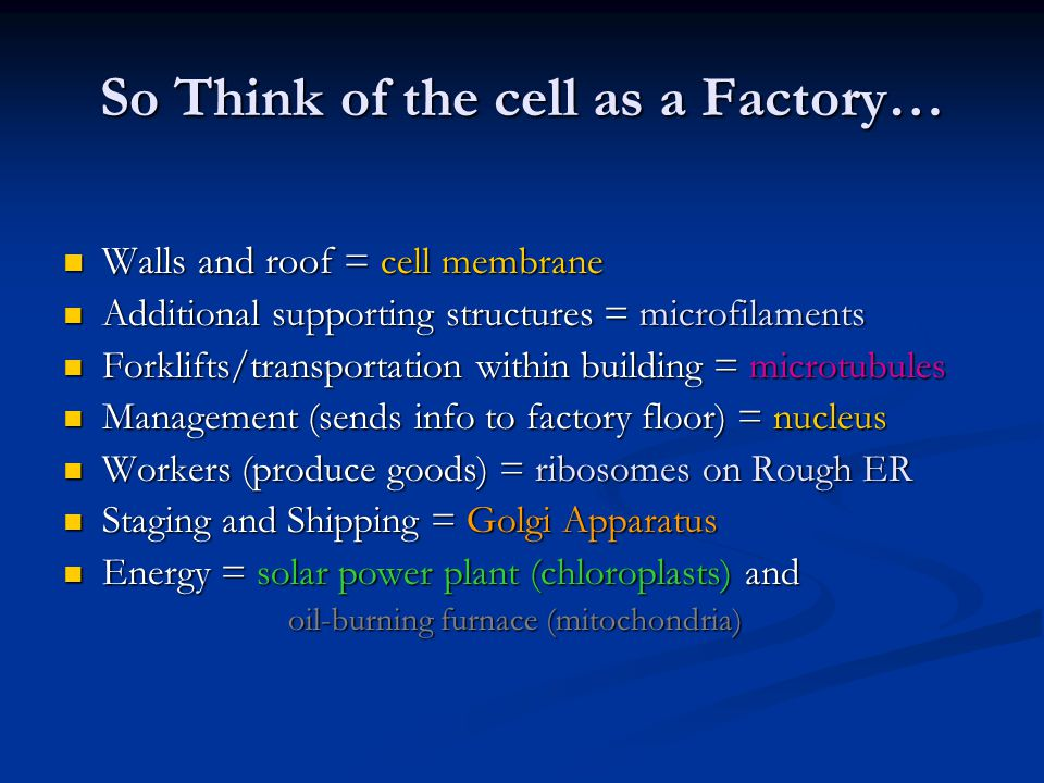 So Think of the cell as a Factory… Walls and roof = cell membrane Walls and roof = cell membrane Additional supporting structures = microfilaments Additional supporting structures = microfilaments Forklifts/transportation within building = microtubules Forklifts/transportation within building = microtubules Management (sends info to factory floor) = nucleus Management (sends info to factory floor) = nucleus Workers (produce goods) = ribosomes on Rough ER Workers (produce goods) = ribosomes on Rough ER Staging and Shipping = Golgi Apparatus Staging and Shipping = Golgi Apparatus Energy = solar power plant (chloroplasts) and Energy = solar power plant (chloroplasts) and oil-burning furnace (mitochondria) oil-burning furnace (mitochondria)