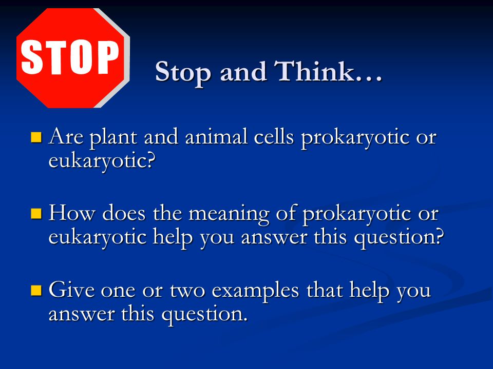 Stop and Think… Stop and Think… Are plant and animal cells prokaryotic or eukaryotic.
