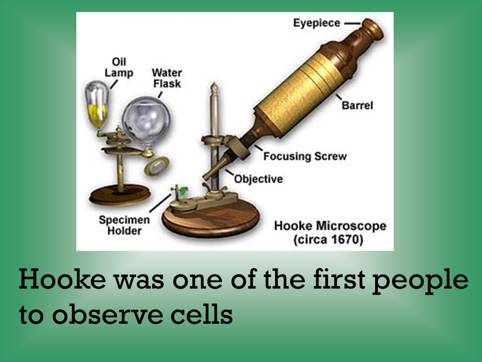 The cell theory states: All living things are made of one or more cells