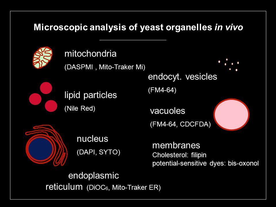 Microscopic analysis of yeast organelles in vivo mitochondria (DASPMI, Mito-Traker Mi) lipid particles (Nile Red) nucleus (DAPI, SYTO) endoplasmic reticulum (DiOC 6, Mito-Traker ER) vacuoles (FM4-64, CDCFDA) endocyt.