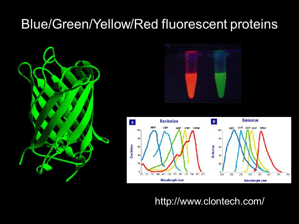 Blue/Green/Yellow/Red fluorescent proteins http://www.clontech.com/