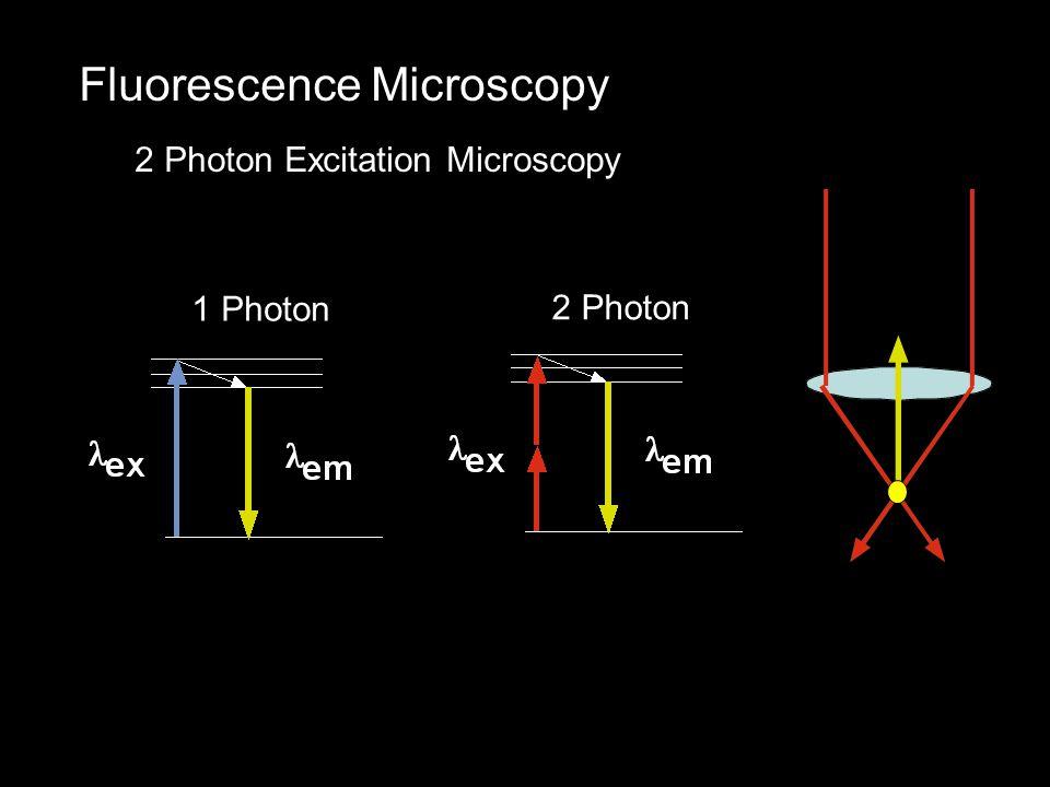 Fluorescence Microscopy 2 Photon Excitation Microscopy 1 Photon 2 Photon