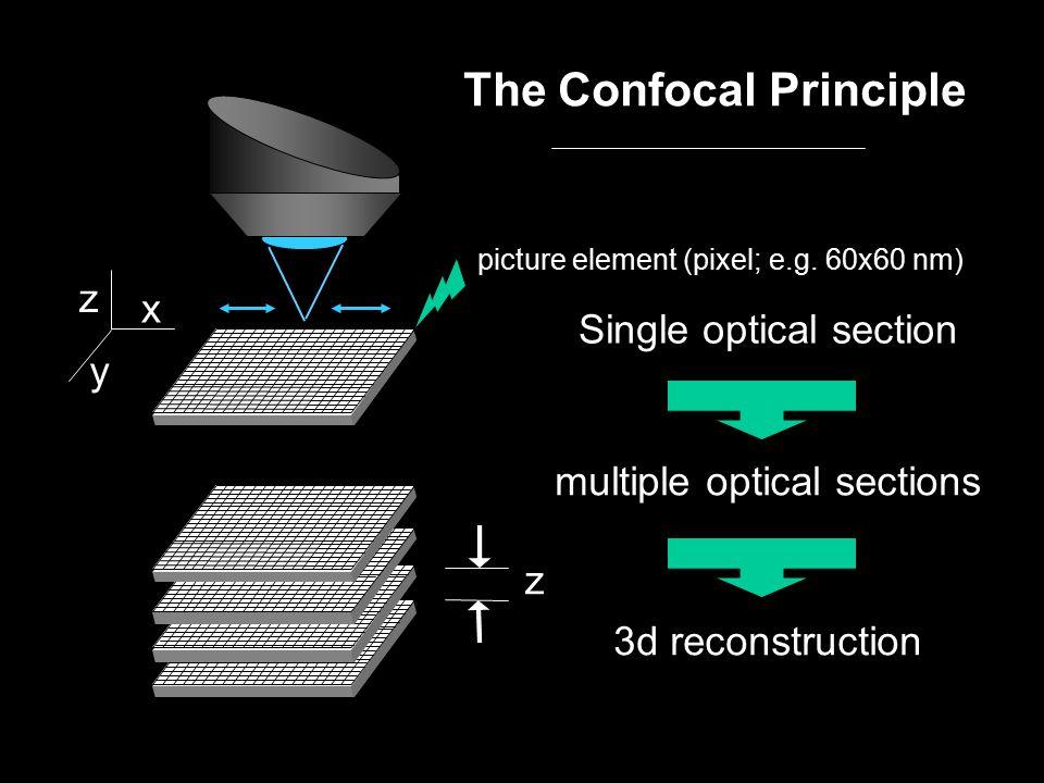 The Confocal Principle Single optical section multiple optical sections 3d reconstruction z z x y picture element (pixel; e.g.