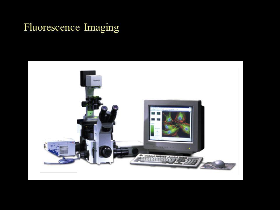 Fluorescence Imaging
