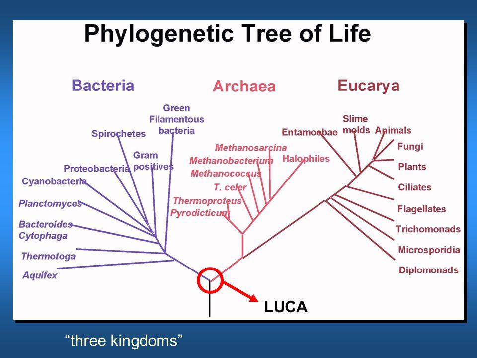 LUCA three kingdoms