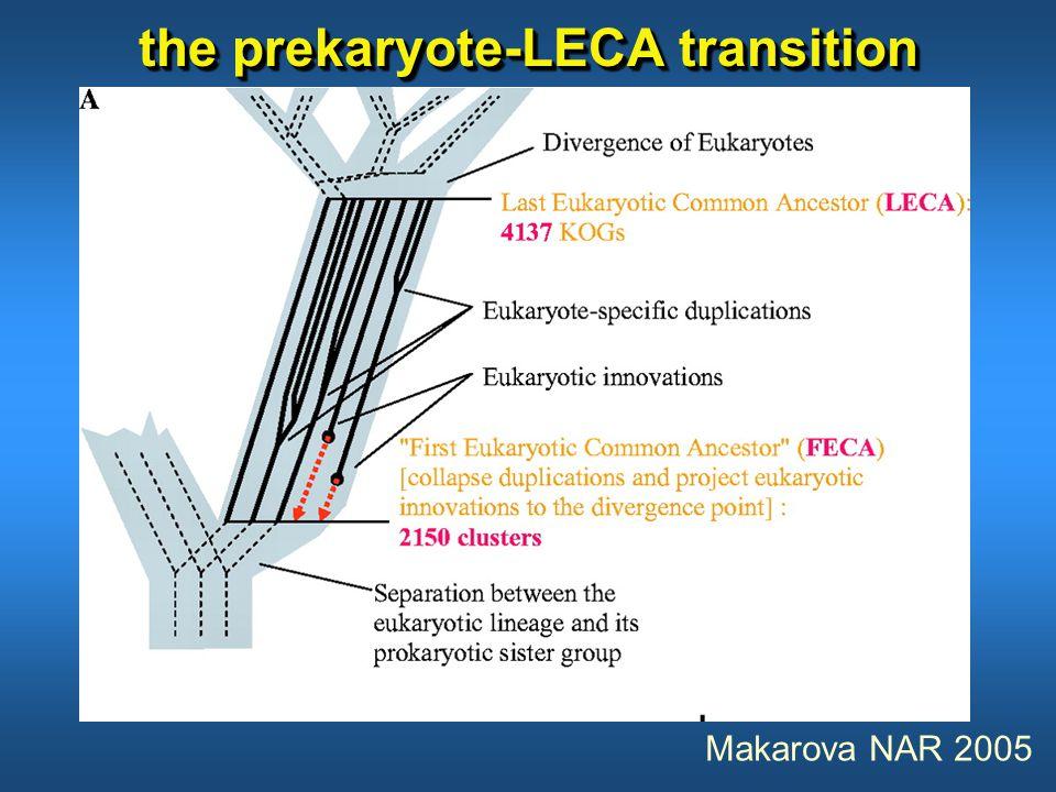 the prekaryote-LECA transition Makarova NAR 2005