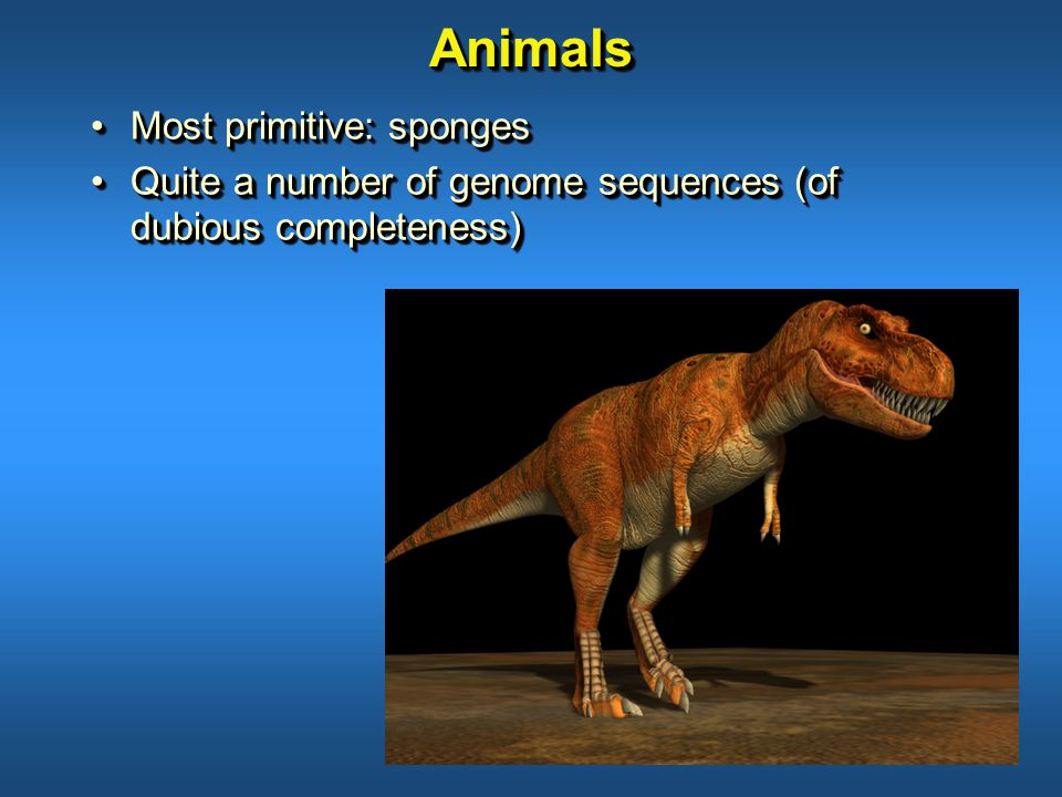 AnimalsAnimals Most primitive: spongesMost primitive: sponges Quite a number of genome sequences (of dubious completeness)Quite a number of genome sequences (of dubious completeness) Most primitive: spongesMost primitive: sponges Quite a number of genome sequences (of dubious completeness)Quite a number of genome sequences (of dubious completeness)