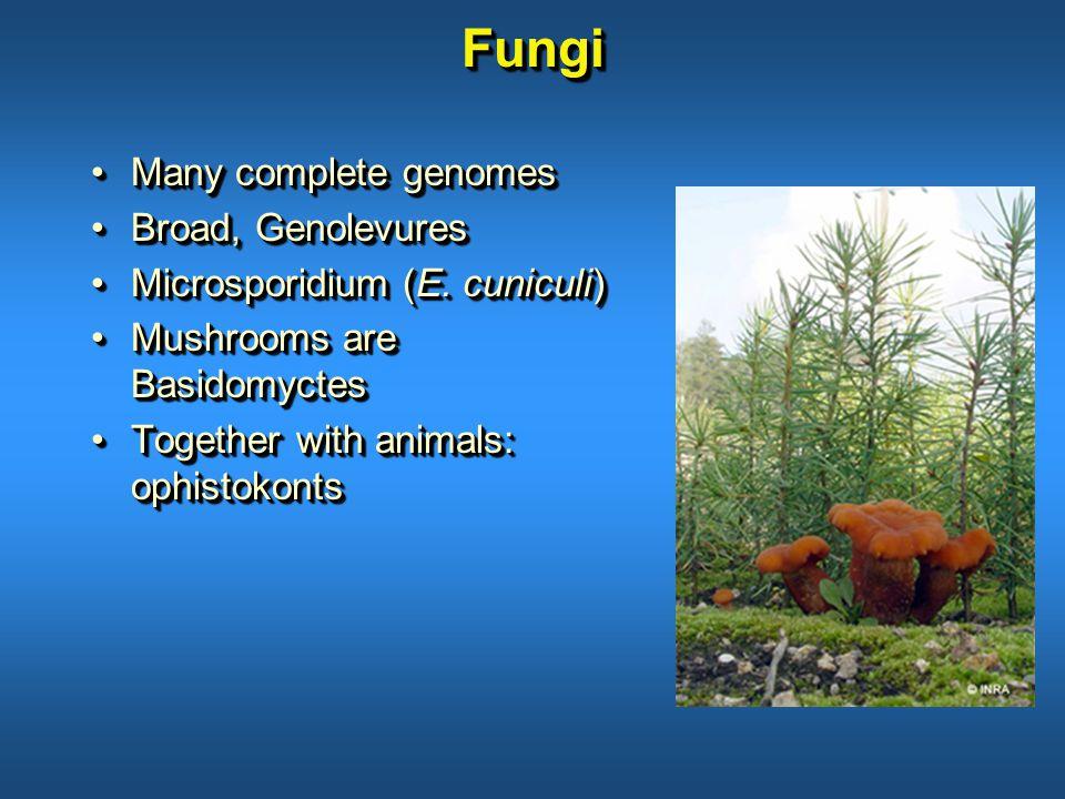 FungiFungi Many complete genomesMany complete genomes Broad, GenolevuresBroad, Genolevures Microsporidium (E.
