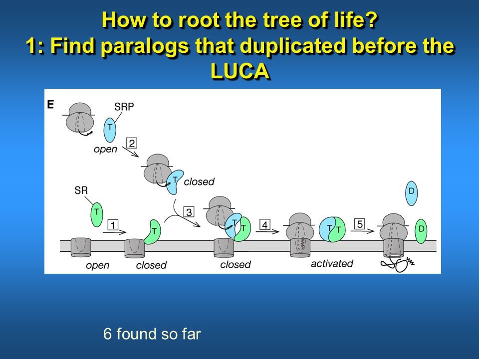 How to root the tree of life? 1: Find paralogs that duplicated before the LUCA 6 found so far