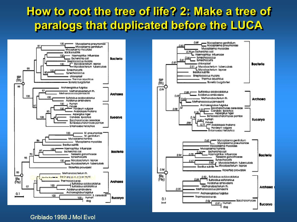 How to root the tree of life.