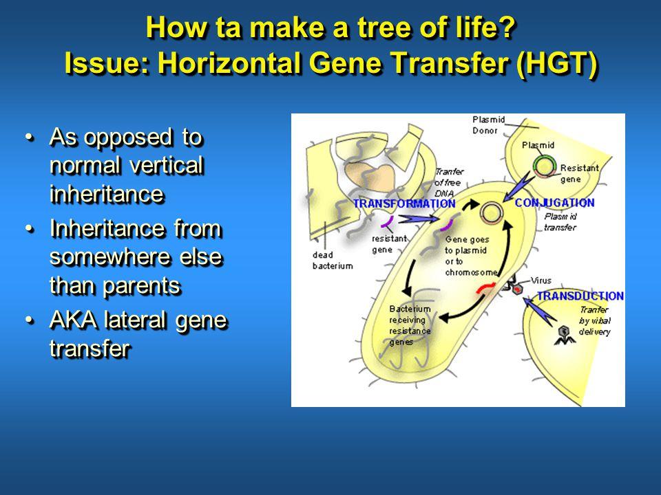 How ta make a tree of life.