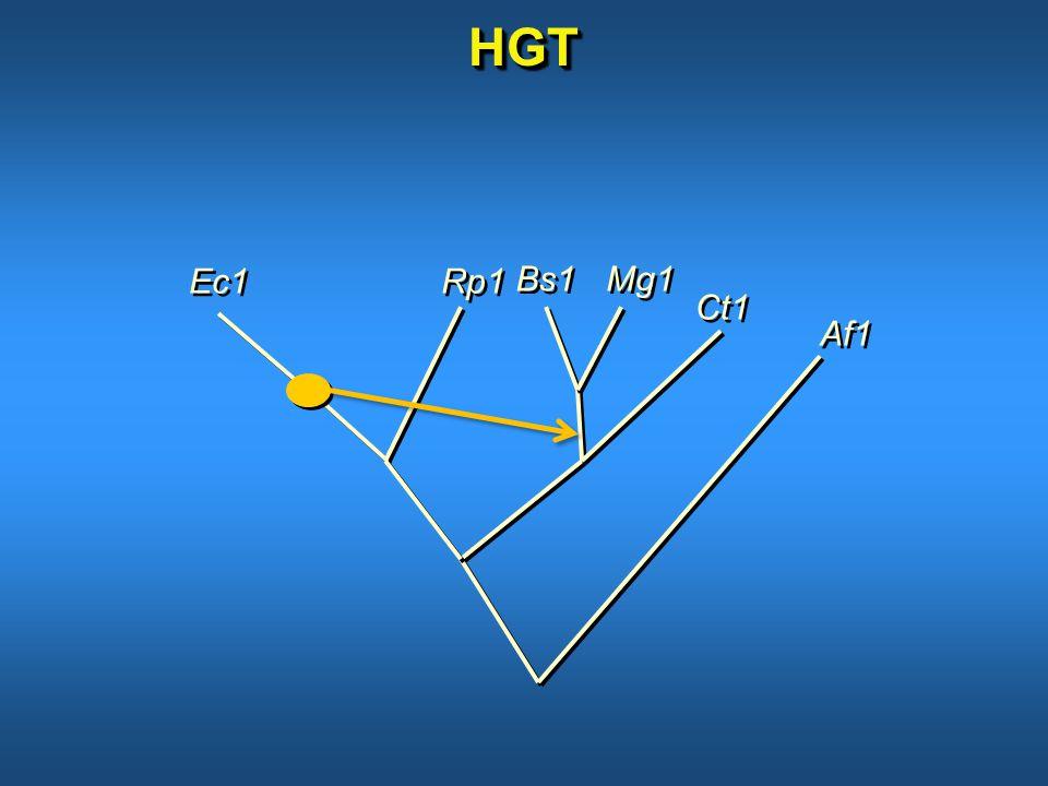 HGTHGT Bs1 Mg1 Ec1 Ct1 Rp1 Af1