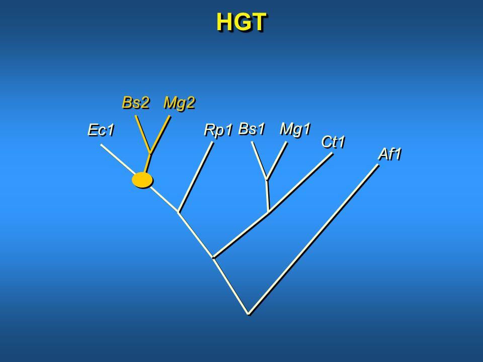 HGTHGT Bs2 Mg2 Bs1 Mg1 Ec1 Ct1 Rp1 Af1