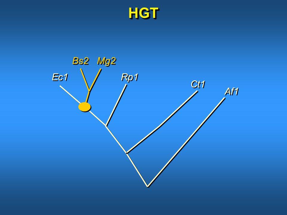 HGTHGT Bs2 Mg2 Ec1 Ct1 Rp1 Af1