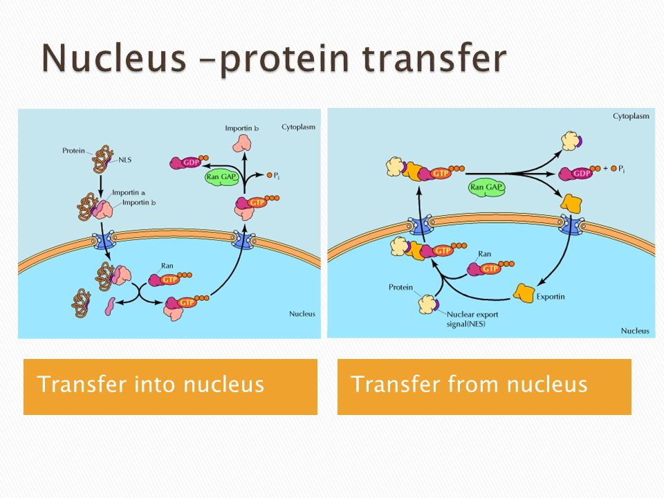 Transfer into nucleusTransfer from nucleus