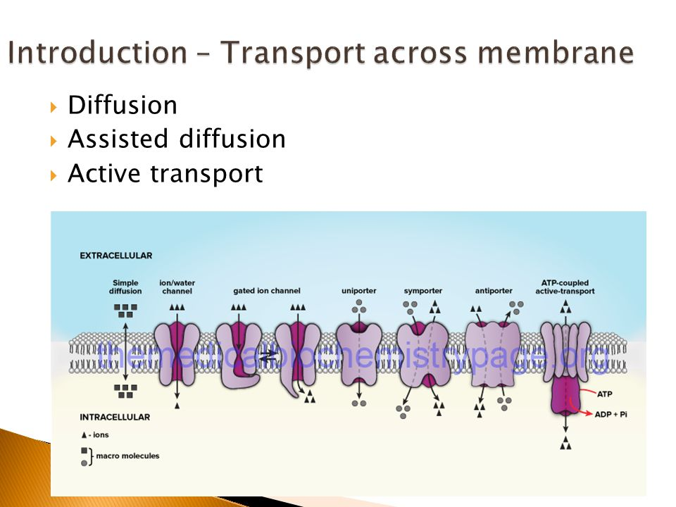  Diffusion  Assisted diffusion  Active transport