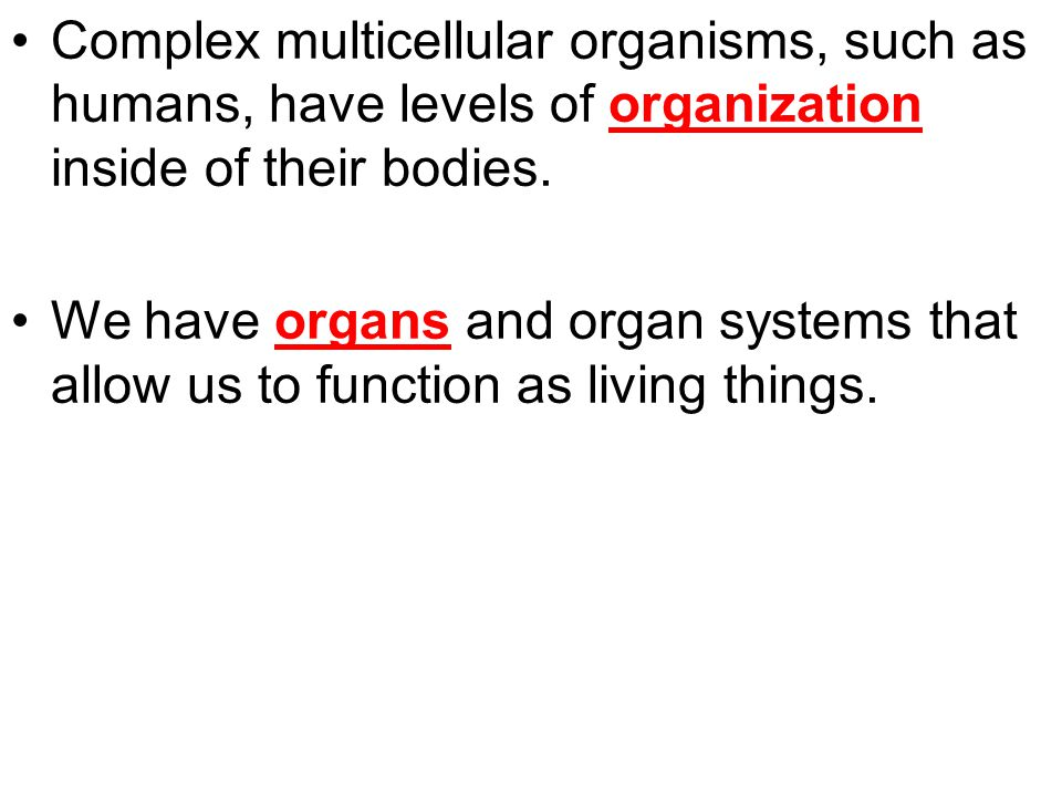 Complex multicellular organisms, such as humans, have levels of organization inside of their bodies. We have organs and organ systems that allow us to
