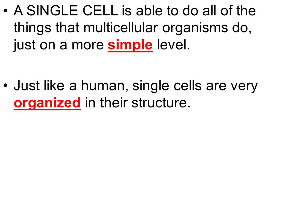 A SINGLE CELL is able to do all of the things that multicellular organisms do, just on a more simple level. Just like a human, single cells are very o