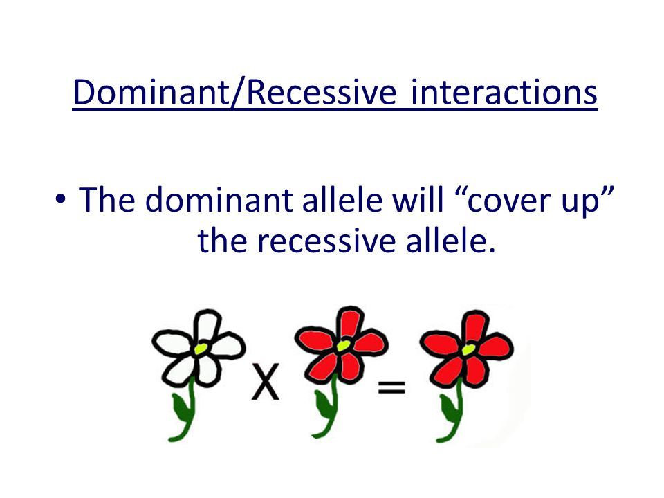 Dominant/Recessive interactions The dominant allele will cover up the recessive allele.
