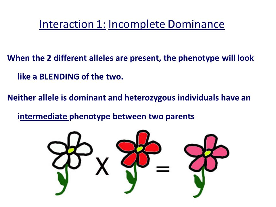  The degree to which an allele is expressed may depend on the environment factors.