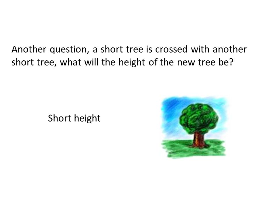 Another question, a short tree is crossed with another short tree, what will the height of the new tree be.