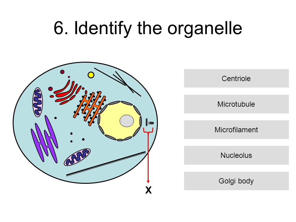 17.What is the function of this organelle.