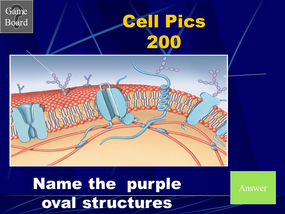 Game Board Cell Pics 100A What are phospholipids?