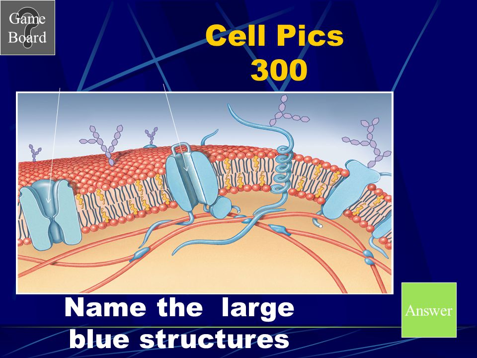 Game Board Cell Pics 200 A What are receptors (receptor proteins)?