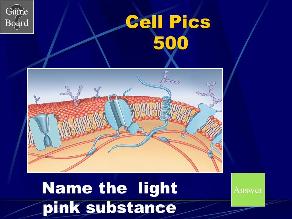 Game Board Cell Pics 400A What is the cytoskeleton