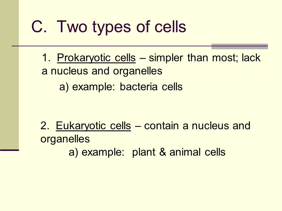 C.Two types of cells 1.