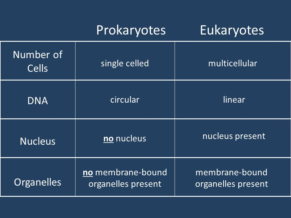 ProkaryotesEukaryotes Number of Cells DNA Nucleus Organelles single celledmulticellular circularlinear no nucleus nucleus present no membrane-bound or