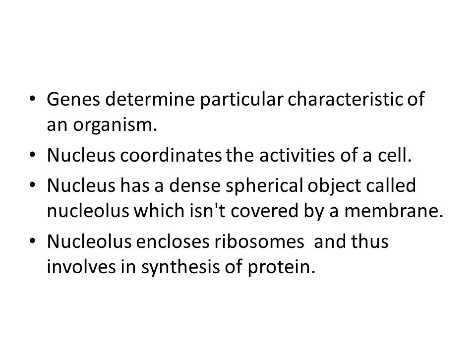 Genes determine particular characteristic of an organism. Nucleus coordinates the activities of a cell. Nucleus has a dense spherical object called nu