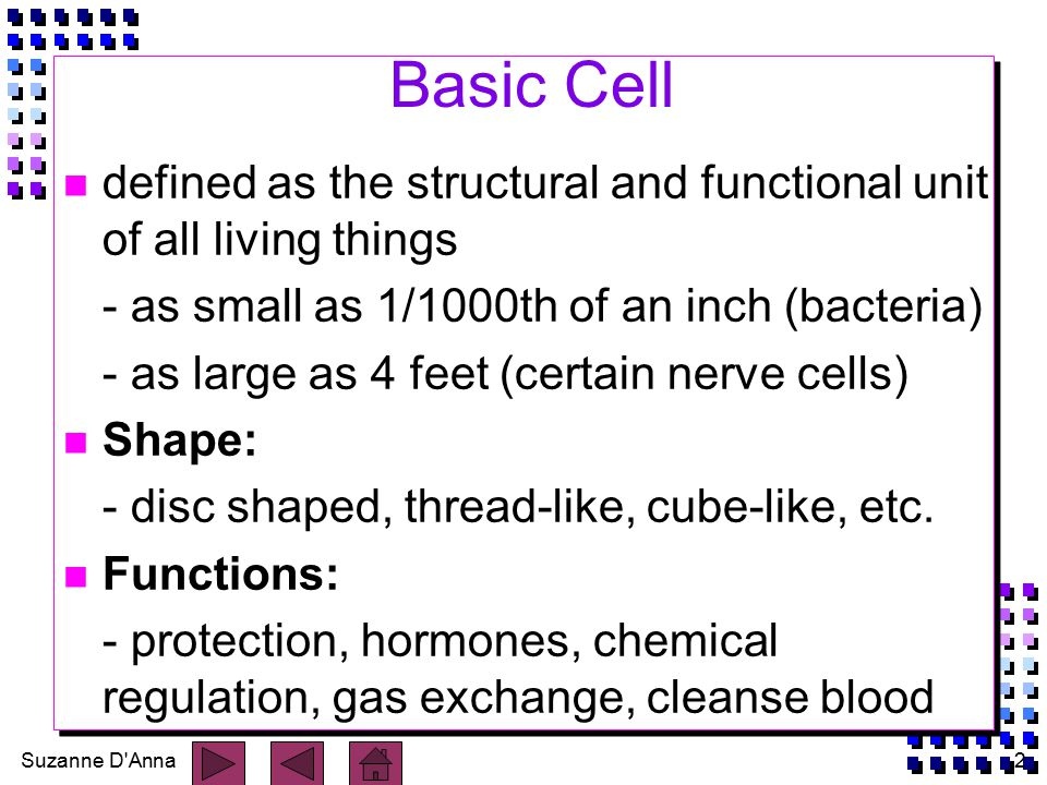 Suzanne D Anna2 Basic Cell n defined as the structural and functional unit of all living things - as small as 1/1000th of an inch (bacteria) - as large as 4 feet (certain nerve cells) n Shape: - disc shaped, thread-like, cube-like, etc.