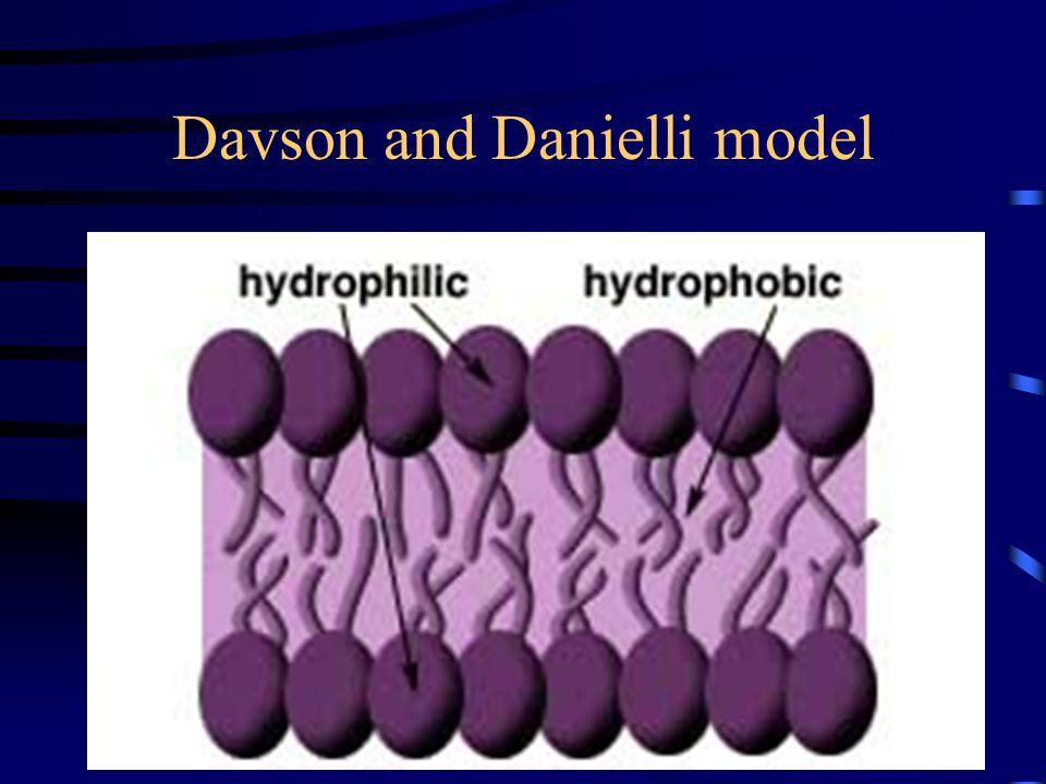Davson and Danielli model