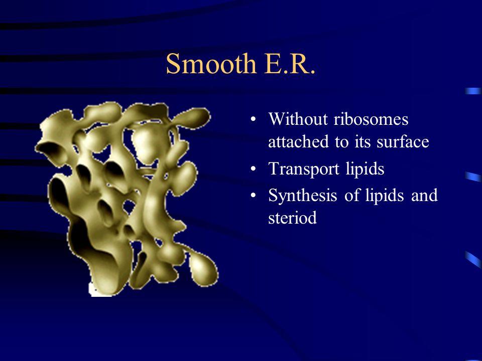Smooth E.R.