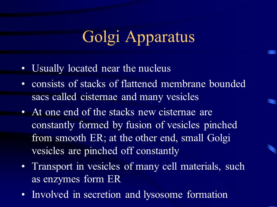 Golgi Apparatus Usually located near the nucleus consists of stacks of flattened membrane bounded sacs called cisternae and many vesicles At one end o