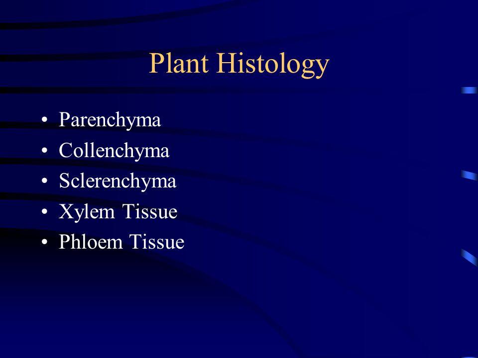 Plant Histology Parenchyma Collenchyma Sclerenchyma Xylem Tissue Phloem Tissue