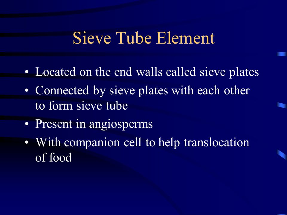Sieve Tube Element Located on the end walls called sieve plates Connected by sieve plates with each other to form sieve tube Present in angiosperms With companion cell to help translocation of food